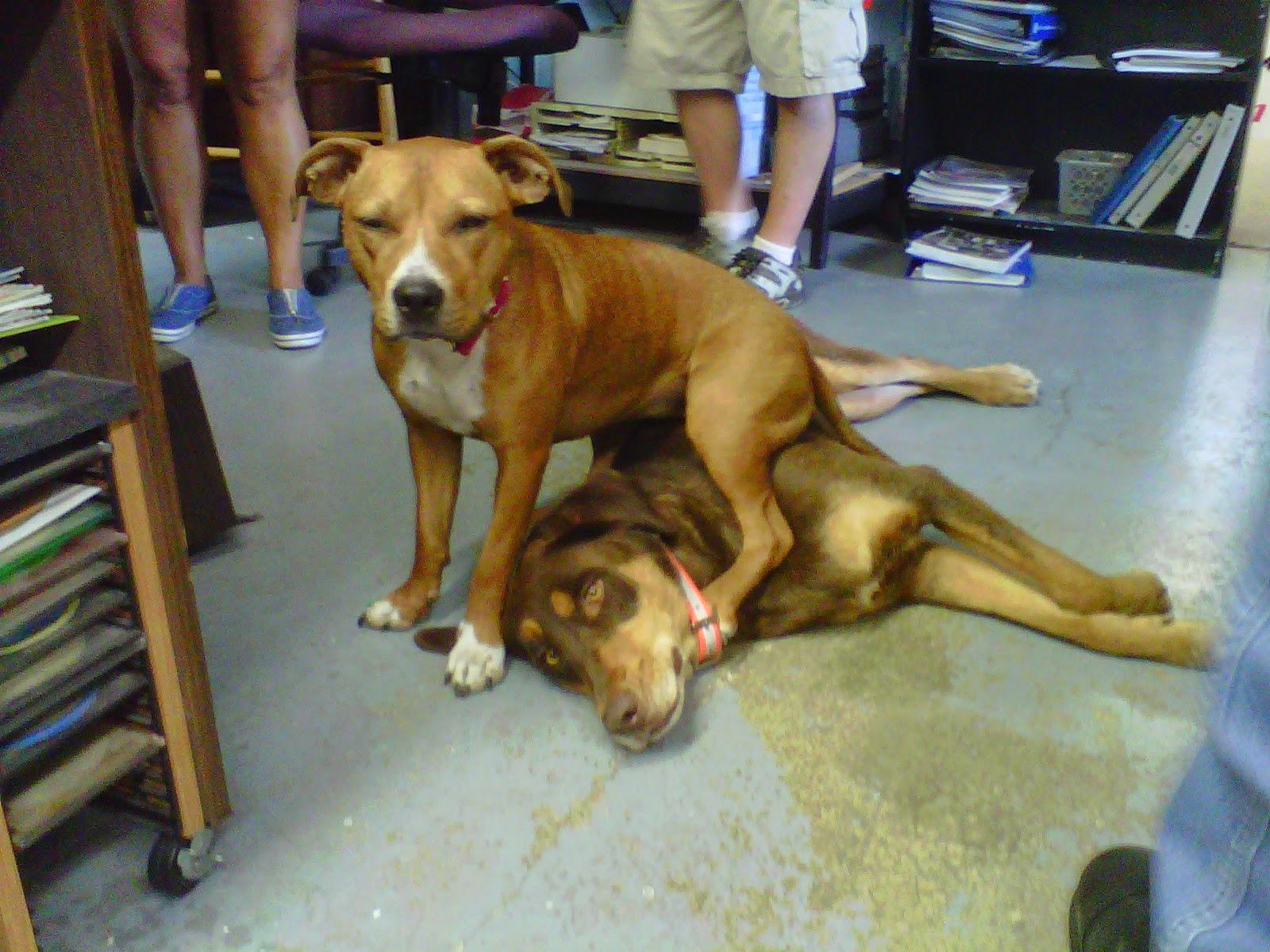Maci and Duke